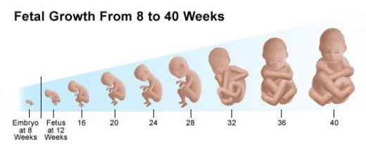 pregnancy signs through the 40 weeks