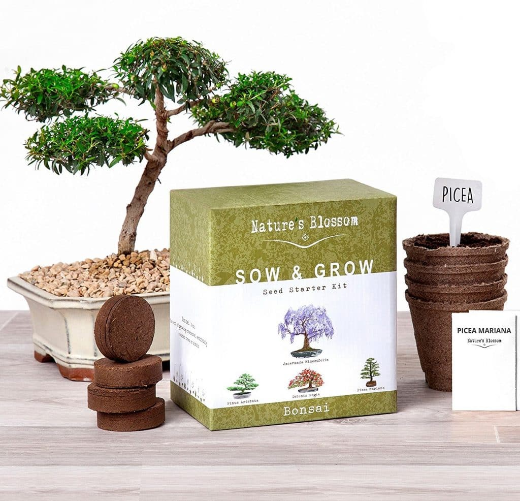 Nature's Blossom Bonsai Trees Germination Kit